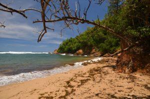 Pointe Rouge<br> Presqu'île de la Caravelle<br> Île de la Martinique