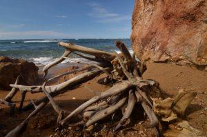 Souches d'arbre lessivées par la mer sur la plage de Pointe Rouge<br> Presqu'île de la Caravelle<br> Île de la Martinique