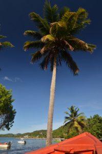 Barques de pêcheurs dans la Baie de Tartane Presqu'île de la Caravelle Île de la Martinique