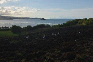 Pointe Rouge<br>Presqu'île de la Caravelle<br>Île de la Martinique