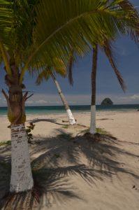 Cocotier (Cocos nucifera) &amp; Rocher du Diamant depuis Anse Cafard<br> Île de la Martinique