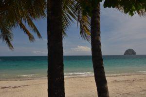 Cocotier (Cocos nucifera) &amp; Rocher du Diamant depuis la plage du Diamant<br> Île de la Martinique