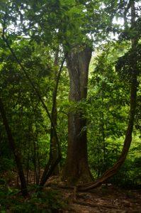 Forêt primitive Chemin de la Cascade de la rivière Couleuvre Île de la Martinique