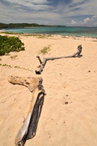 Plage de Grande Anse près de Cap Ferré Trace des Caps Île de la Martinique