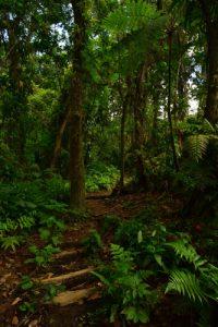 La Trace des Jésuites<br> Parc Naturel Régional de La Martinique