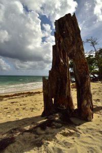 Le sentier littoral de Sainte-Luce<br> Parc Naturel Régional de La Martinique