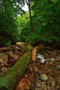 La Rivière des 3 Bras<br> Chemin Prêcheur - Grand'Rivière<br> Parc Naturel Régional de La Martinique