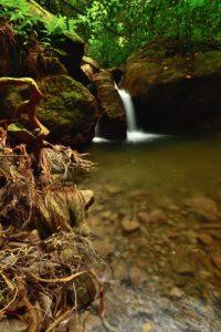 Petite Cascade de la rivière Couleuvre<br> Chemin de Cascade Couleuvre<br> Parc Naturel Régional de La Martinique