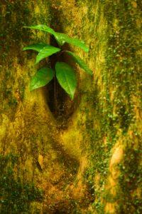Forêt Hygrophile (Forêt tropicale humide)<br> Chemin de Cascade Couleuvre<br> Parc Naturel Régional de La Martinique
