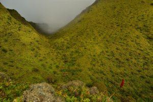 L'Ananas rouge-montagne (Pitcairnia spicata)<br> Parc Naturel Régional de La Martinique