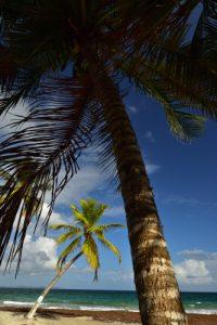 Le Rocher du Diamant depuis Anse Cafard<br> Parc Naturel Régional de La Martinique