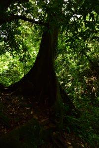 Anse des Galets<br> Parc Naturel Régional de La Martinique