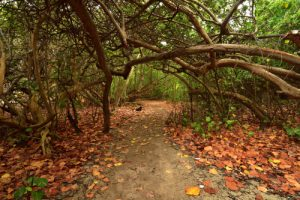 La Trace des Caps<br> Parc Naturel Régional de La Martinique