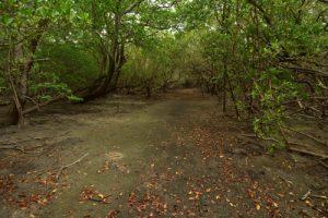Mangrove de Grand-Anse Macabou<br> La Trace des Caps<br> Parc Naturel Régional de La Martinique