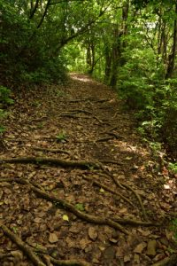 La Pointe Banane<br> Parc Naturel Régional de La Martinique