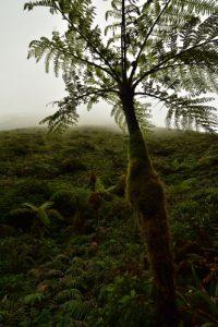 La Montagne Pelée<br> Parc Naturel Régional de La Martinique