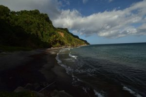 La Misère (Tradescantia zebrina / Zebrina pendula)<br> Chemin de l cascade Couleuvre<br> Parc Naturel Régional de La Martinique