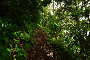 Trace Grand-Rivière à Prêcheur<br> Parc Naturel Régional de La Martinique