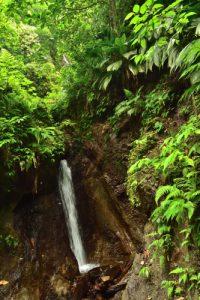 La Cascade de la Rivière Trois Bras<br> Trace Grand-Rivière à Prêcheur<br> Parc Naturel Régional de La Martinique