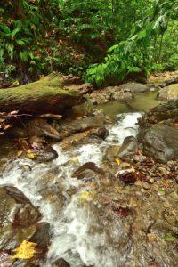 La Rivière Trois Bras<br> Trace Grand-Rivière à Prêcheur<br> Parc Naturel Régional de La Martinique