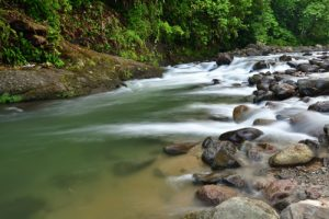 La Forêt de Rabuchon &amp; la Rivière Blanche<br> Parc Naturel Régional de La Martinique
