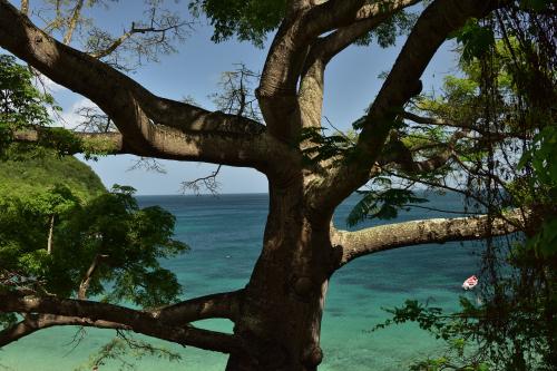 Parc Naturel Régional de La Martinique