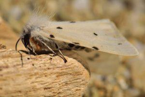 Papillon<br> Cap Taillat<br> Le Massif des Maures