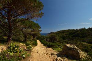 Forêt près du Dolmen de la Baie de Briande<br> Le Massif des Maures