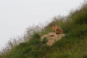 De la baisse aux lacs de Peïrefique Parc National du Mercantour / Région de la vallée des Merveilles / Vallée de la Roya
