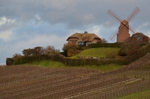 Les vignes du Champagne près du Moulin de Verzenay<br> Parc naturel régional de la Montagne de Reims
