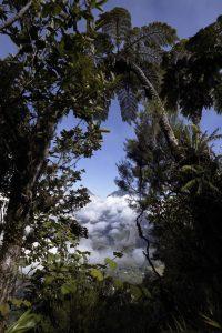 Vue sur le Piton des Neiges et le Cirque de Salazie depuis Bélouve<br> Île de la Réunion