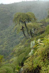 Chûte de Takamaka<br> Île de la Réunion