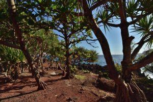 La Pointe Langevin<br> Île de la Réunion