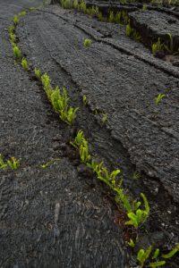La rivière de lave.<br> La Pointe de la Table<br> Parc National de la Réunion