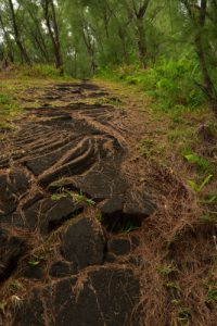 Lave cordée.<br> La Pointe de la Table<br> Parc National de la Réunion
