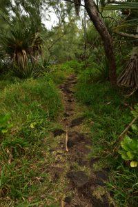 Chemin côtier de la Pointe de la Table<br> Parc National de la Réunion