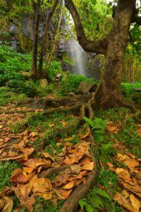 Anse des cascades<br> Parc National de la Réunion
