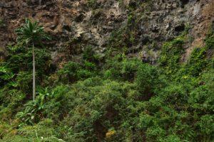 La Ravine de Bernica<br> Parc National de la Réunion
