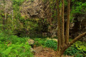 La Ravine de Bernica &amp; le bassin Pigeon<br>Parc National de la Réunion