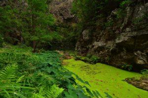La Ravine de Bernica &amp; le bassin Pigeon<br> Parc National de la Réunion