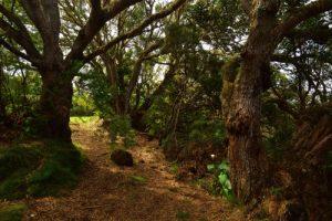 Forêt primaire sur le Dimitile<br>Parc National de la Réunion