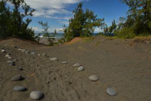 Chemin côtier de la Forêt de l'Etang Salé à Etang de Gol<br> Île de la Réunion