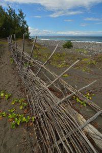 Fascines de protection des dunes.<br> Forêt de l'Etang Salé<br> Île de la Réunion