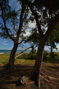 Forêt de l'Etang Salé &amp; Etang de Gol<br>Île de la Réunion