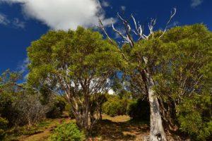 Les Trous Blancs près du Piton Sec<br> Parc National de la Réunion