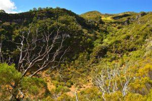 Le premier cratère de type Maar des Trous Blancs<br> Parc National de la Réunion