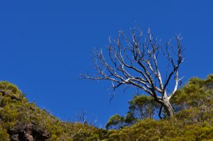 Bord du premier cratère de type Maar des Trous Blancs<br> Parc National de la Réunion
