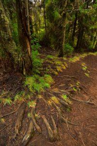 Forêt proche des Trous Blancs et du Piton Sec<br> Parc National de la Réunion
