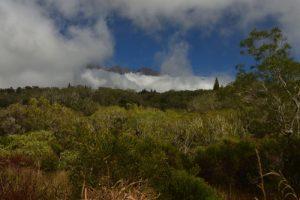 Point de vue sur le Piton des Neiges<br> La Forêt de Bélouve<br> Parc National de la Réunion