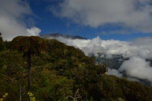 Point de vue sur le Piton des Neiges et le Cirque de Salazie<br> La Forêt de Bélouve<br> Parc National de la Réunion